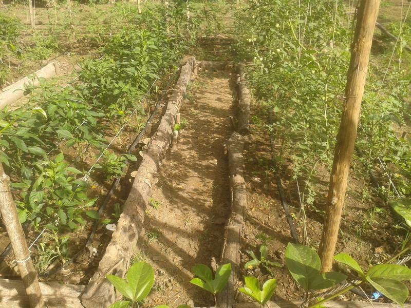 El huerto de nuestra casa. 2010-122