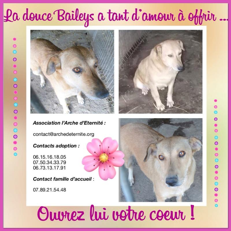 BAILEYS, née en 2011, sauvée de l'équarrissage - parrainée par Nathalie -SOS-R-SC - Page 2 13af9b10