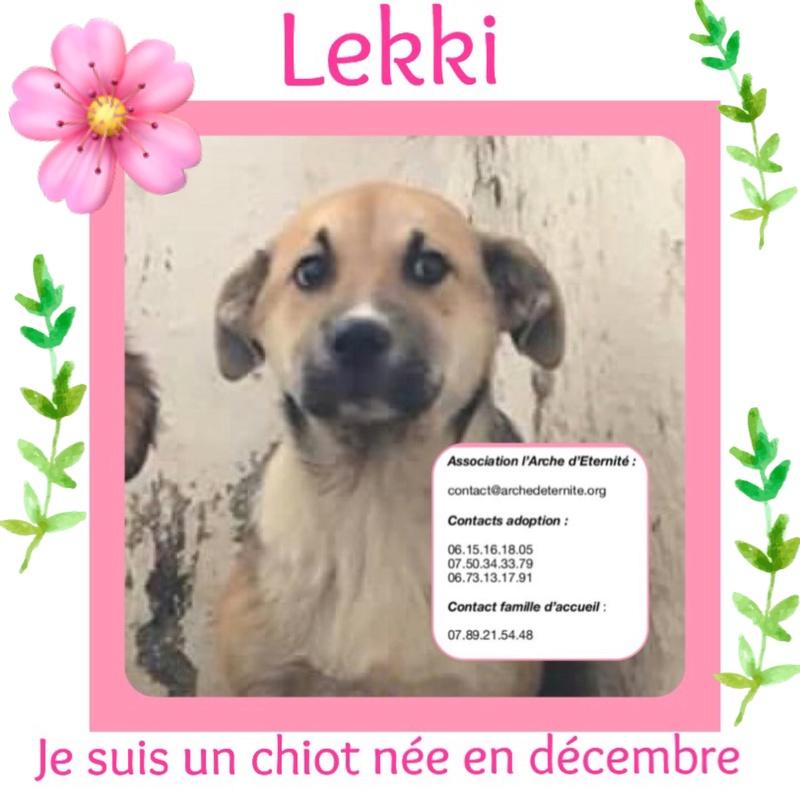 LEKKI (grand gabarit) - né le 28/11/2017 - bb de Elena -  EN FA DANS LE 72- Marrainé par Dianou -R-SOST-SC-30MA- 3a375910