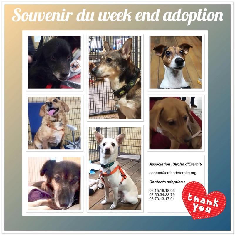 Week-end Adoption du 27 et 28 Janvier - Page 2 3ea3f310