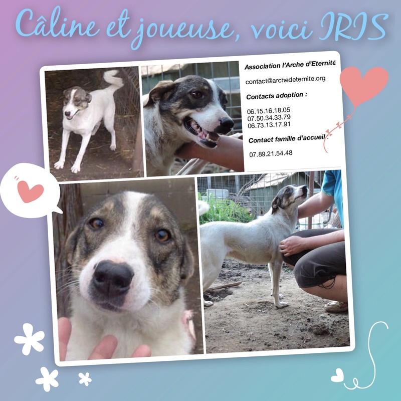 IRIS, née en 2015 - sauvée de la rue - Parrainée par Perdita -  OANA -SC-R-SOS- 8a075810