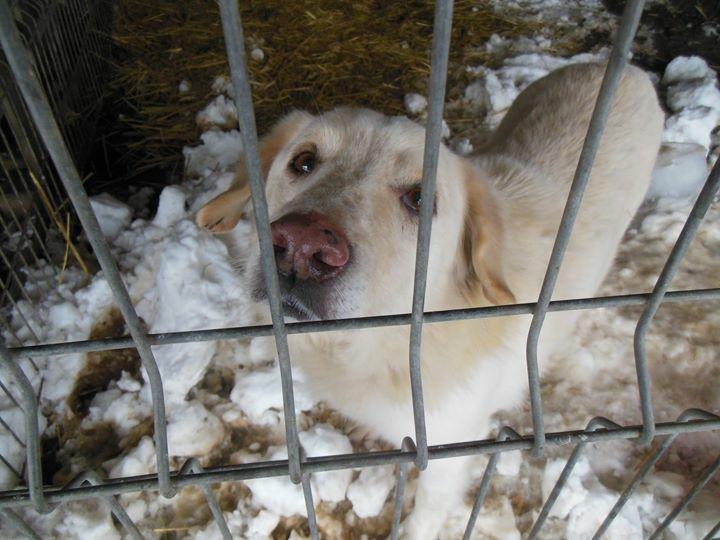 BALANUCH, mâle croisé berger sauvé de Pallady, né en 2009 parrainé par Nathalie Gamblin-SC-R-SOS- - Page 2 Aef62c10