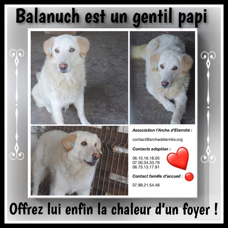 BALANUCH, mâle croisé berger sauvé de Pallady, né en 2009 parrainé par Nathalie Gamblin-SC-R-SOS- - Page 2 E4343610
