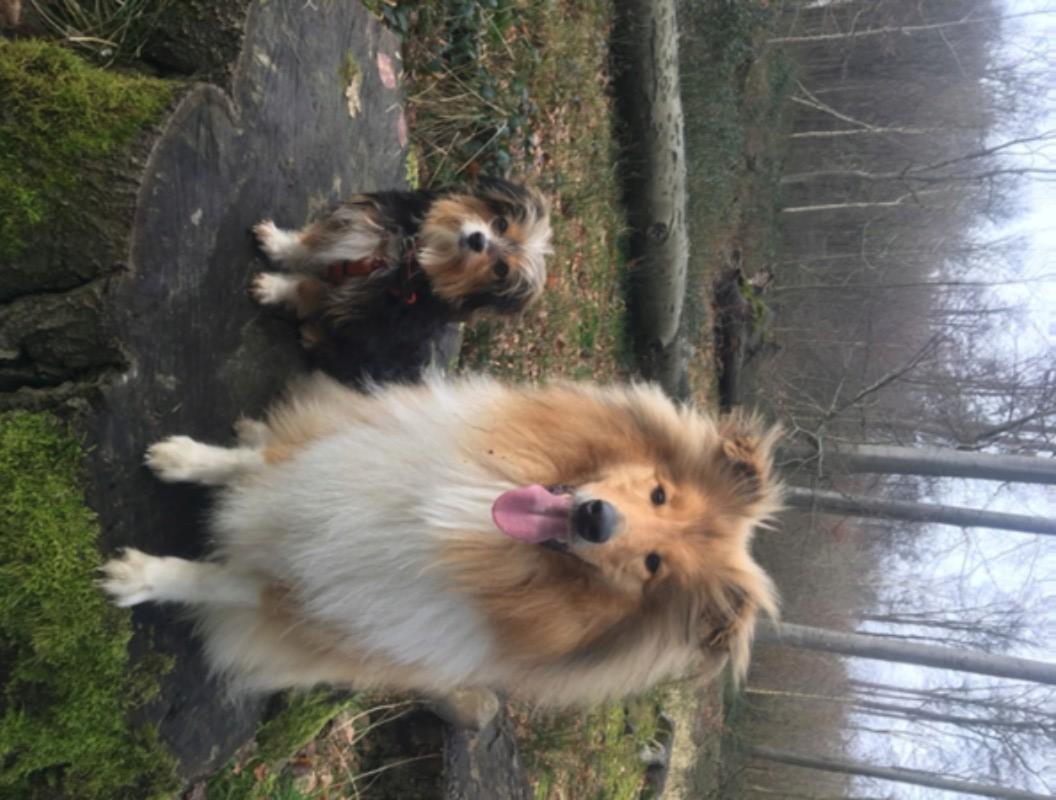 RITA - Femelle, croisée, née en 2014/2015 - Taille petite -En Famille d'accueil chez Marusia. Adoptée par Valérie (Belgique) - Page 4 D3dca210