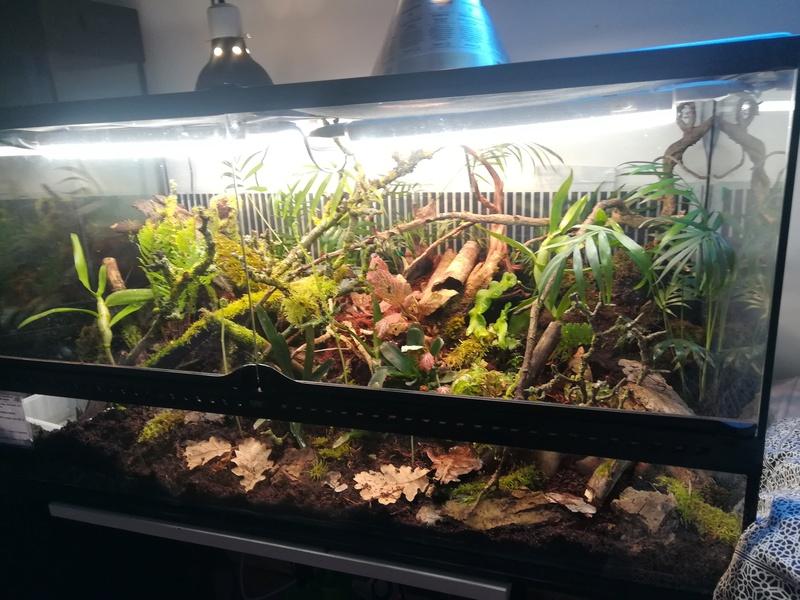 Nouveau terrarium à dendrobates Img_2027