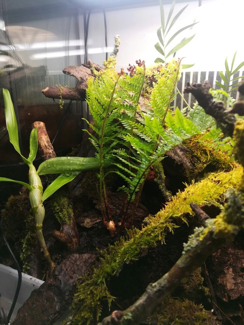 Nouveau terrarium à dendrobates Img_2028
