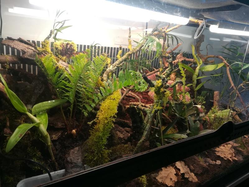 Nouveau terrarium à dendrobates Img_2029