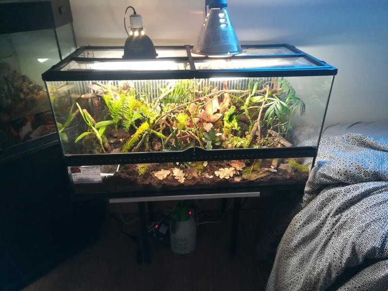 Nouveau terrarium à dendrobates Img_2030