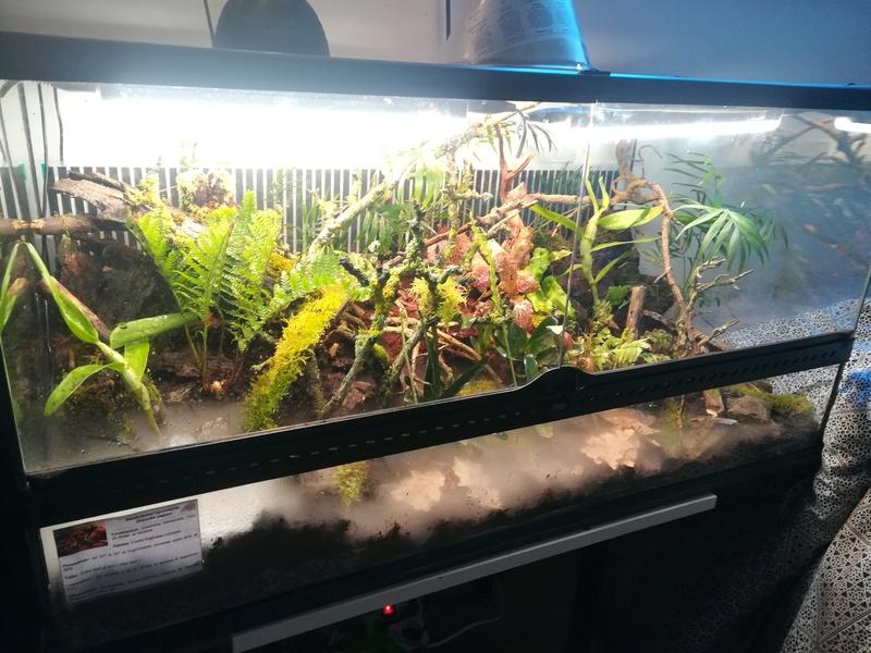 Nouveau terrarium à dendrobates Img_2031