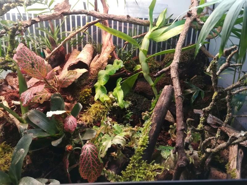 Nouveau terrarium à dendrobates Img_2032