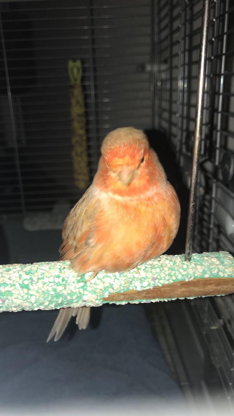 J'ai trouvé un oiseau blessé  45ebc110