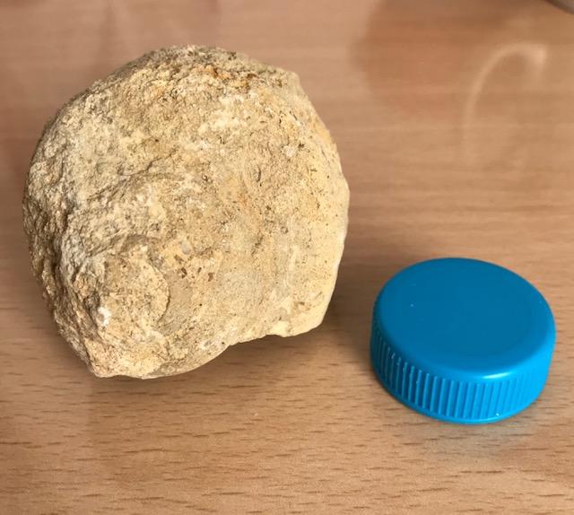 Fósil caracola Caraco10