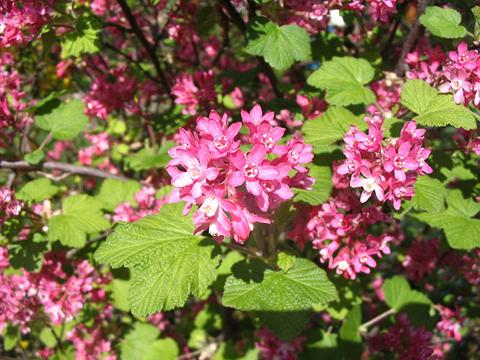 Fleurs de saison - Page 7 Grosei10