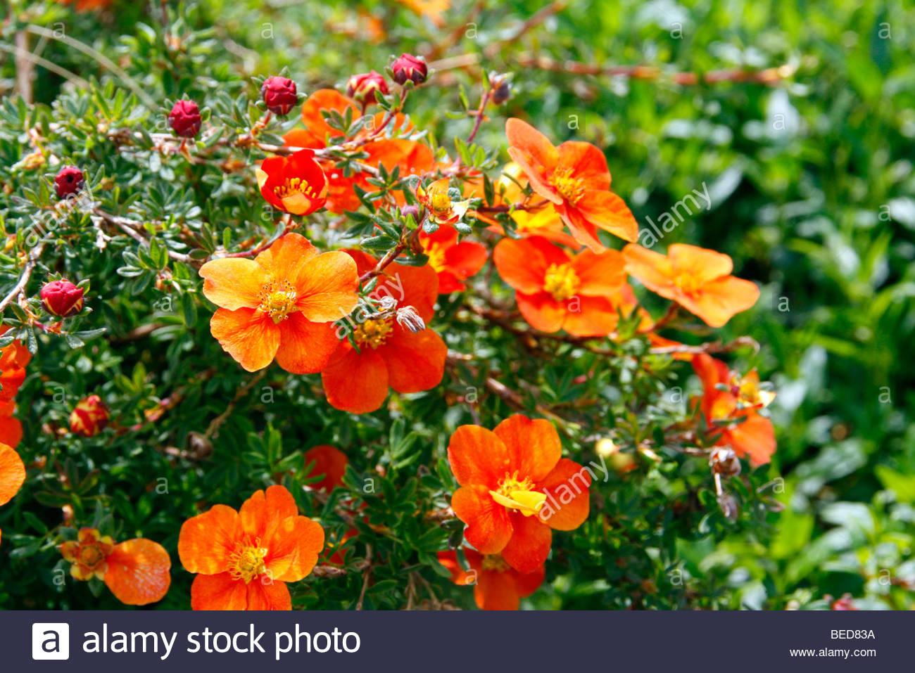 Fleurs de saison - Page 14 Potent10
