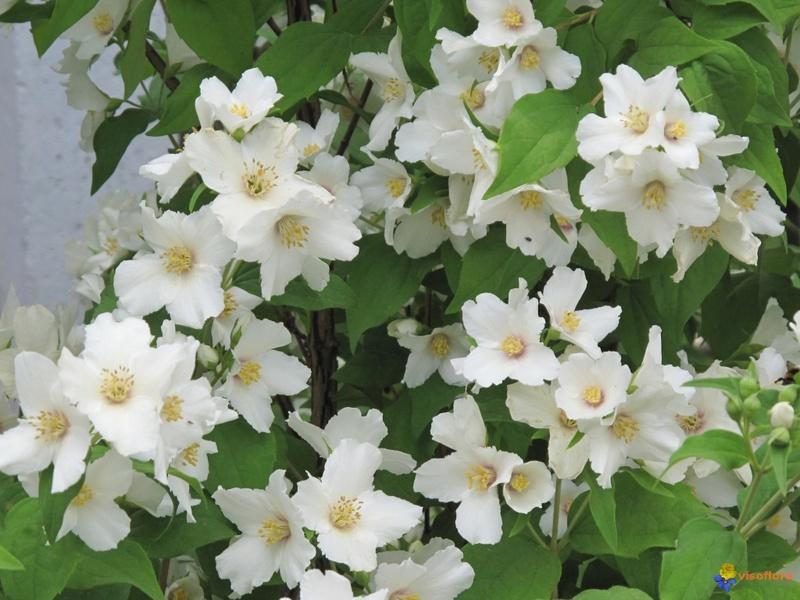 Fleurs de saison - Page 7 Sering10