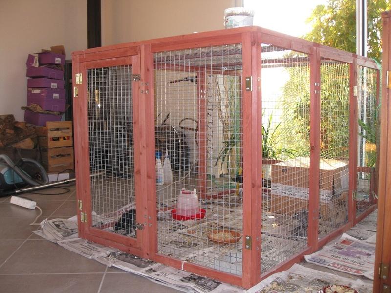 Ma grande cage d'élevage Img_0119