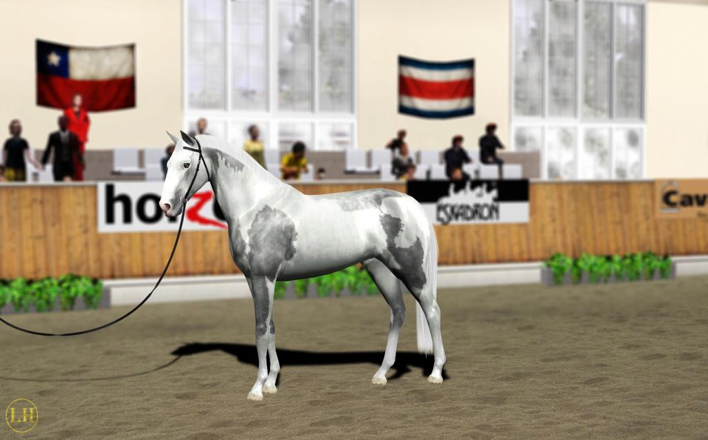 Регистрация лошадей в RHF 2 - Страница 8 10710