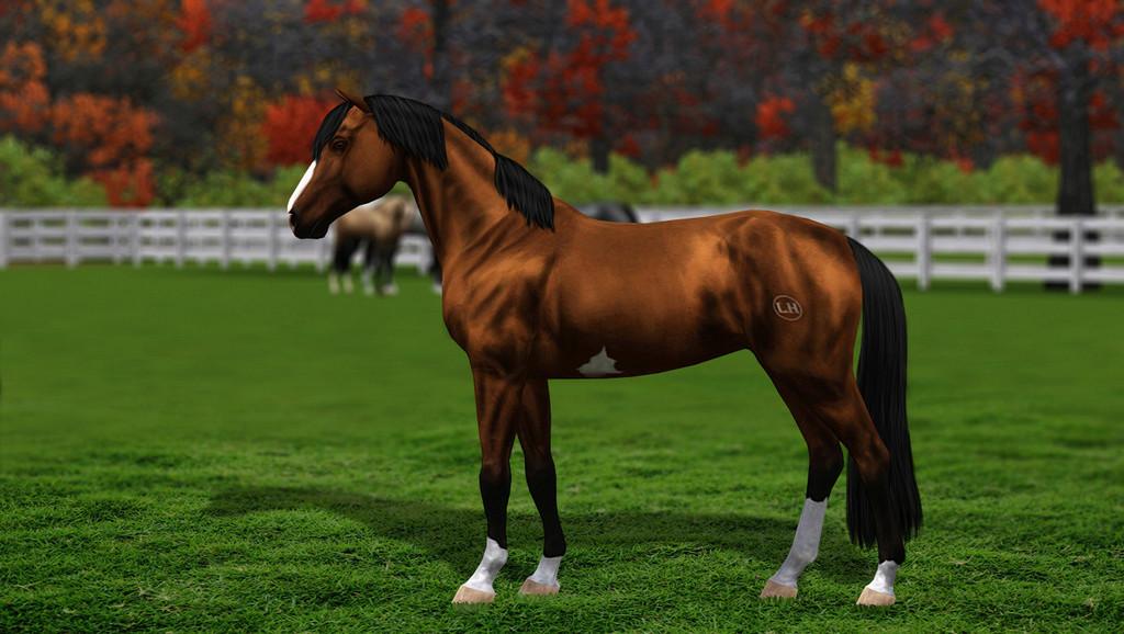 Регистрация лошадей в RHF 2 - Страница 8 1711