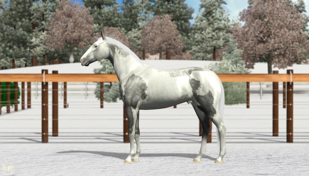 Регистрация лошадей в RHF 2 - Страница 8 2311