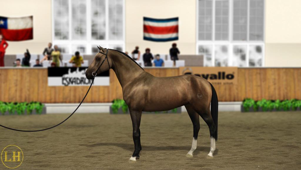 Регистрация лошадей в RHF 2 - Страница 8 7210