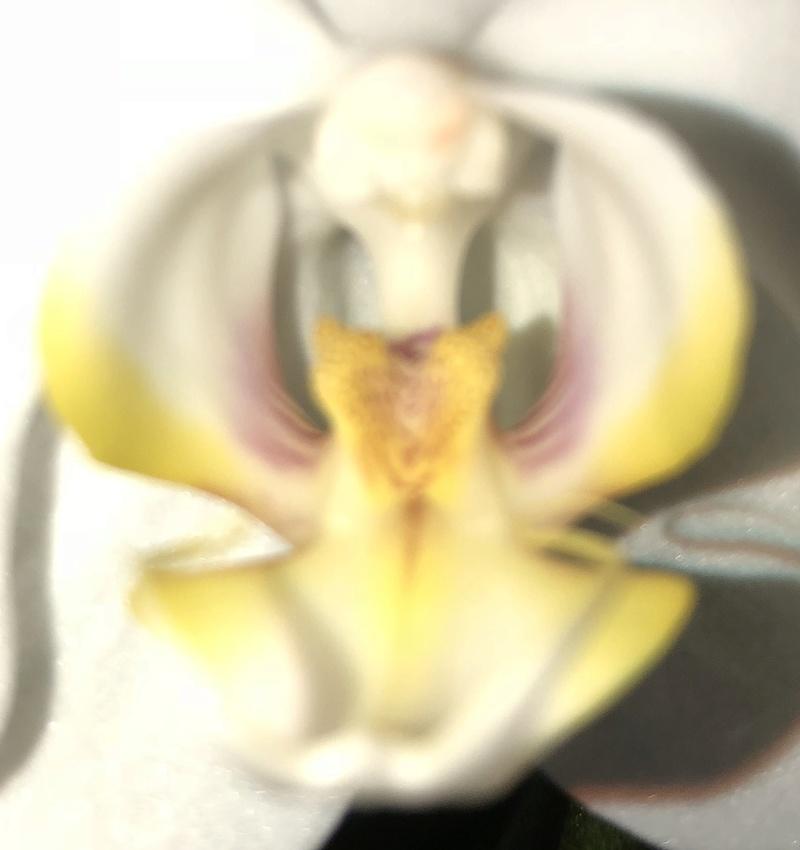 Orchideen-Neuzugang - Seite 41 Riesen12