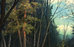Forêt Endormie