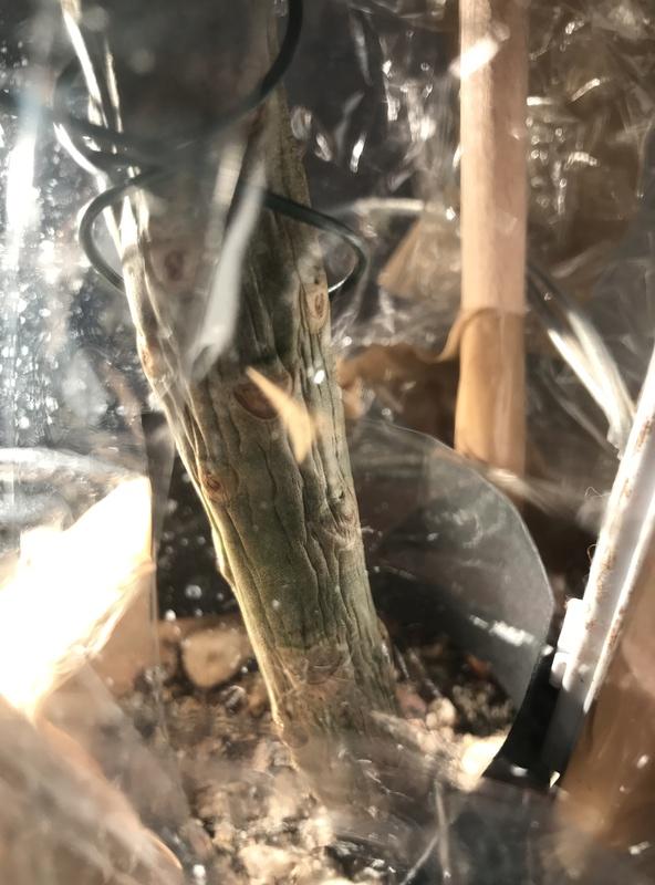 Ma récolte de bouture de frangipanier du mois d'Aout de Thailande... Img_0510