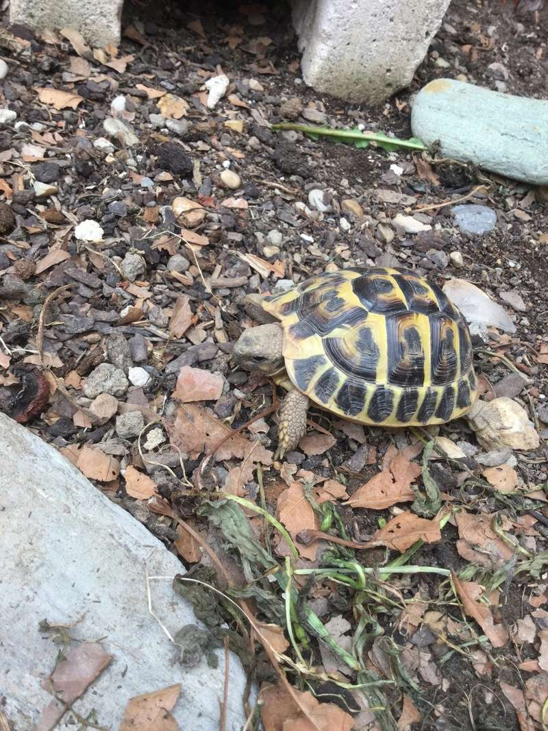 Identification de ma tortue 0b049310