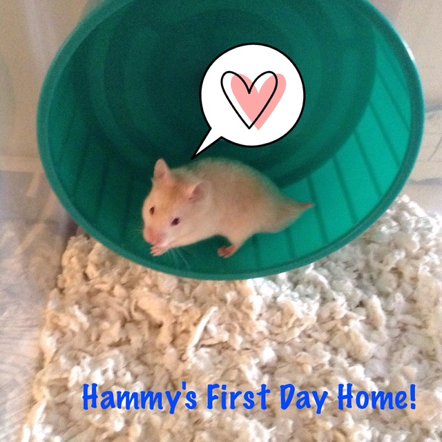 Obi the hamster Image15