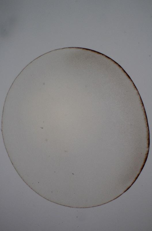 Desarrollo embrionario de la rana Embrio10