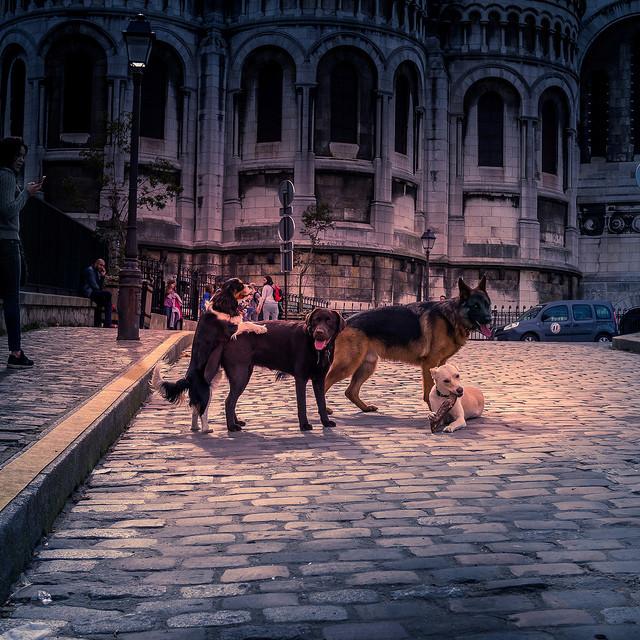 Et pendant ce temps, à Montmartre.... 39502410