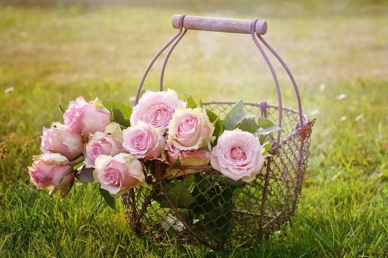 Bon anniversaire au forum Roses-10
