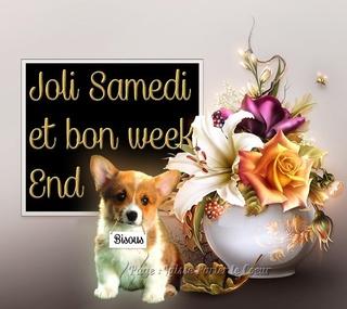 Bonjour Bonsoir de Janvier  - Page 3 Samedi11