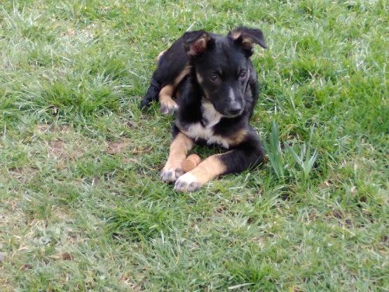 Nookie - femelle  - refuge de Târgu Frumos - Réservée adoption (67) 0bee0f10