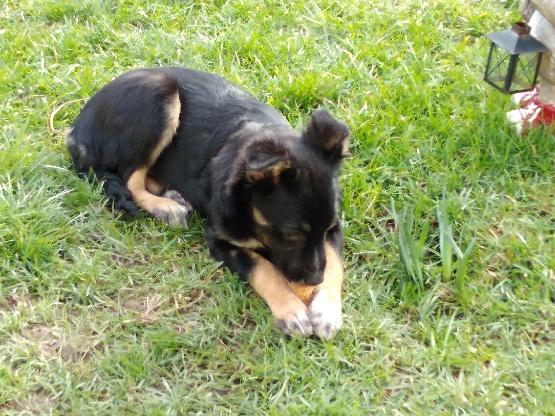 Nookie - femelle  - refuge de Târgu Frumos - Réservée adoption (67) 1d50f210