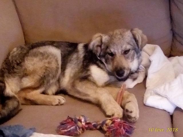 Namka (ex Loufka) - femelle - refuge de Târgu Frumos - réservée adoption 27848510