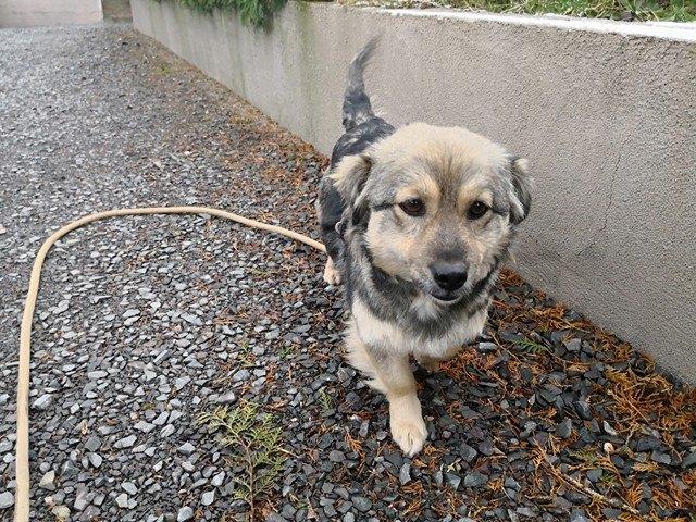 Ellie (ex-Lady) - femelle - refuge de Târgu Frumos - réservée adoption en France 27939310