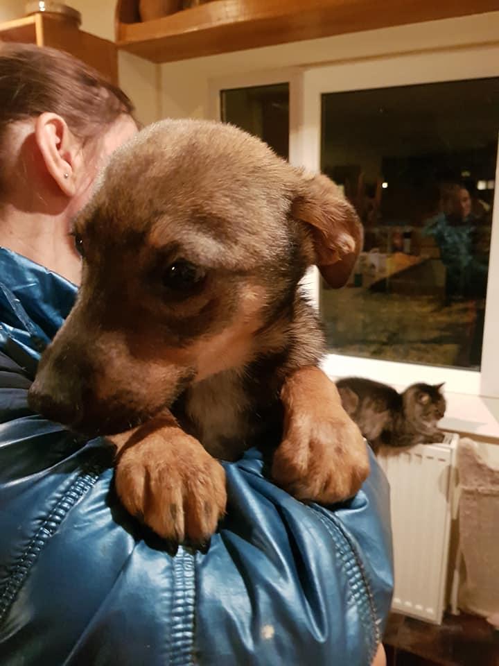 Picolo - mâle - refuge de Târgu Frumos - adopté via Andreea 28279010