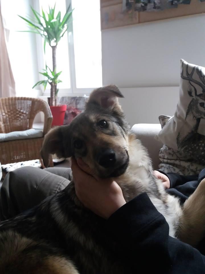 Namka (ex Loufka) - femelle - refuge de Târgu Frumos - réservée adoption 28383910