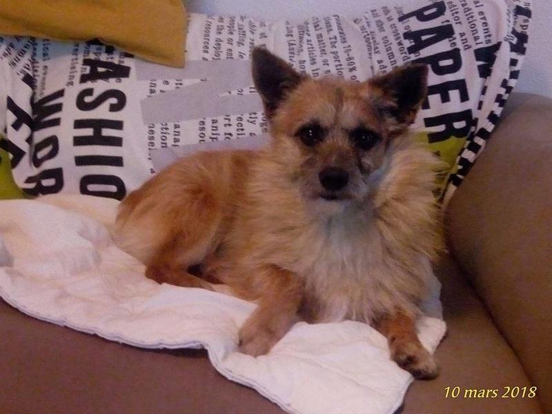 Scruffy - mâle - Adopté (75) 29136410