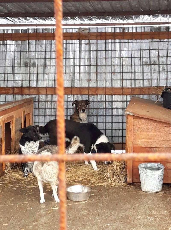 La fourrière communale de Târgu Frumos 2dec5910