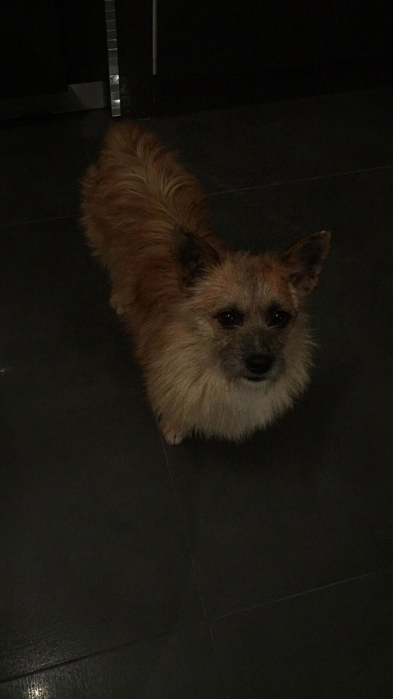 Scruffy - mâle - Adopté (75) 30232110