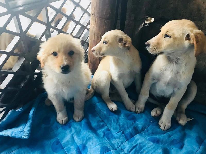 Aramis - mâle - chez Andreea (Târgu Frumos) - réservé adoption (68) 30704910