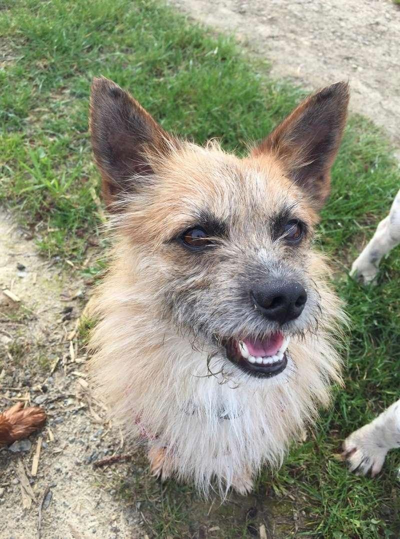 Scruffy - mâle - Adopté (75) 30768510