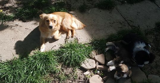 Valentina - femelle - chez Rudy (Iasi) - réservée adoption (68) 30991610