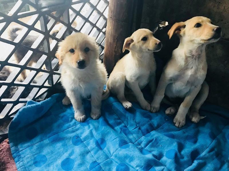 Aramis - mâle - chez Andreea (Târgu Frumos) - réservé adoption (68) 31043810