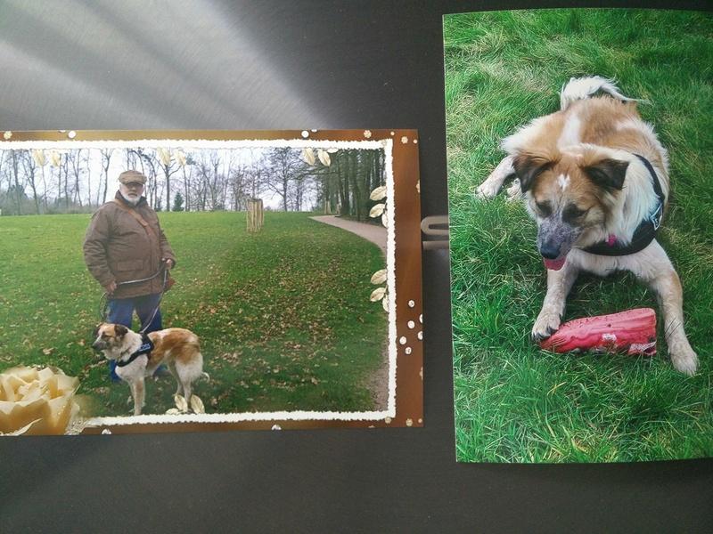 Láska (ex-Dana) - femelle - refuge de Târgu Frumos - réservée adoption (88) 31068810
