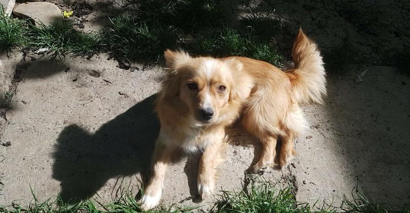 Valentina - femelle - chez Rudy (Iasi) - réservée adoption (68) 31123710