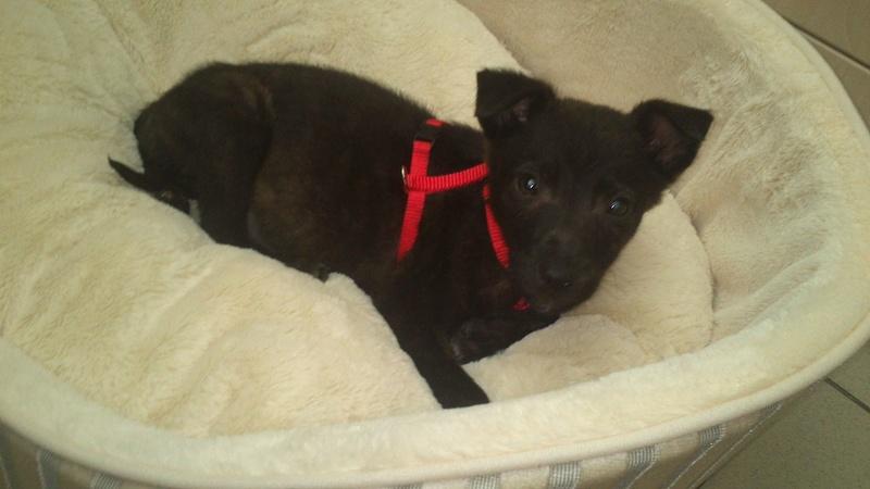 Cooky (ex-Newton) - mâle - Târgu Frumos - réservé adoption (67) 31562110