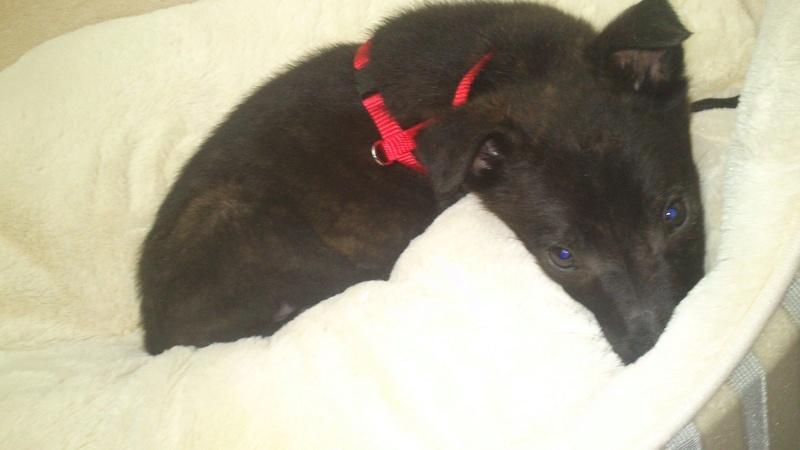 Cooky (ex-Newton) - mâle - Târgu Frumos - réservé adoption (67) 31689110